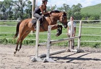 2018 Solomon Farm German Riding Pony Auction