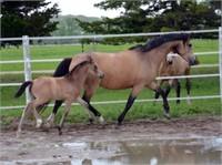 2017 Solomon Farm Fall Foal & Broodmare Auction