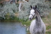 2017 Solomon Farm Fall Riding Horse & Youngstock Auction