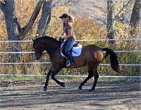 2016 Solomon Farm Riding Horses and Broodmares Fall 2016