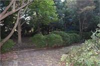 Large Priviate Backyard