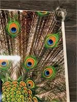 Metro Zoo Peacock Poster