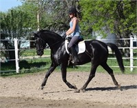 2019 Solomon Farm Riding Horses and Ponies