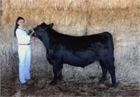 2020 Solano County Fair Jr Livestock Auction