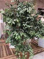 714 - BEAUTIFUL LARGE NEVERDIE TREE
