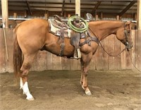 Holiday Registered Horse Sale--January 2nd