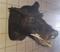 Mounted Animal Taxidermy Auction