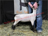 Willamette Valley Lamb and Goat Sale