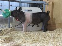 April 1 Trowbridge Farms Pig Sale