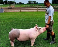 BRUNE / SEEBURGER 4-H PIG SALE