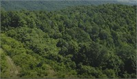 158 Acres Off Panther Creek Road Sneedville, TN 37869