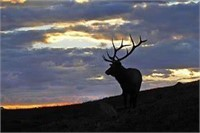 Campbell County Predator Board Commissioner Tag