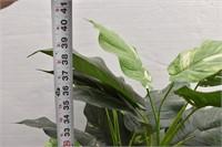 Green Silk Plant in Wicker Vase/Pot