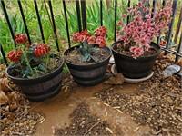 3 - Planters