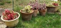 6 - Planters
