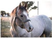 Gordyville Spring Horse Sale