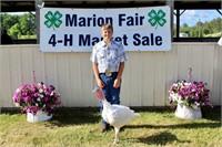 Marion Fair Auction