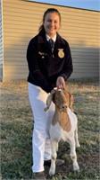 2021 Solano County Fair Jr Livestock Auction