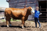 Carberry Beef 4H Steer Sale
