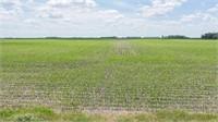 Worth County Land Auction, 120 Acres M/L