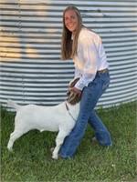2021 Teton County 4-H Livestock Auction