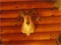 Paulding, MI Taxidermy Mount, Ammo and More Online Auction