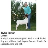 Cascade County 4-H Livestock Auction
