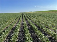 Miller Farmland & Acreage