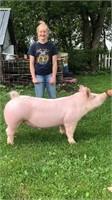 Floyd Co. Fair Livestock Auction - LIVE and ONLINE