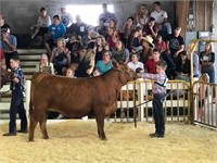 Madison Co. IN 4H Showring Sponsorship Auction