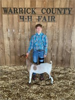 Warrick County Livestock Auction 2021