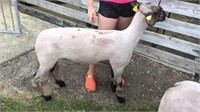 Warren Co. Fair 4-H and FFA Livestock Auction