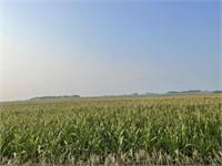 Straub Farmland
