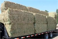 Lot 5011 - (24) Bales Alfalfa Hay, see catalog for more info & pics