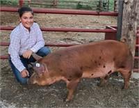 Grant County Fair Junior Livestock Auction 2021