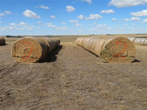 Alfalfa (STACK #2) (2021 Crop)