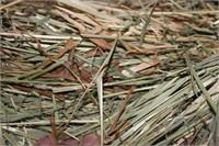 Hay, Bedding, Firewood #34 (8/25/2021)