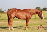 Gaffney, SC Carolina Horsemans Connection Fall Special