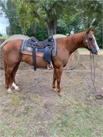 Special Fall Trail Horse Sale
